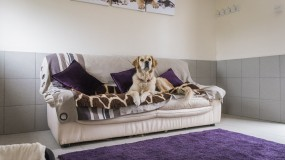 Kennels in Worcestershire | PetcentralHotel_02