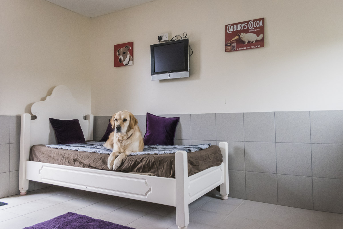 Kennels in Worcestershire | PetcentralHotel_14