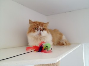 Cattery Bromsgrove Redditch