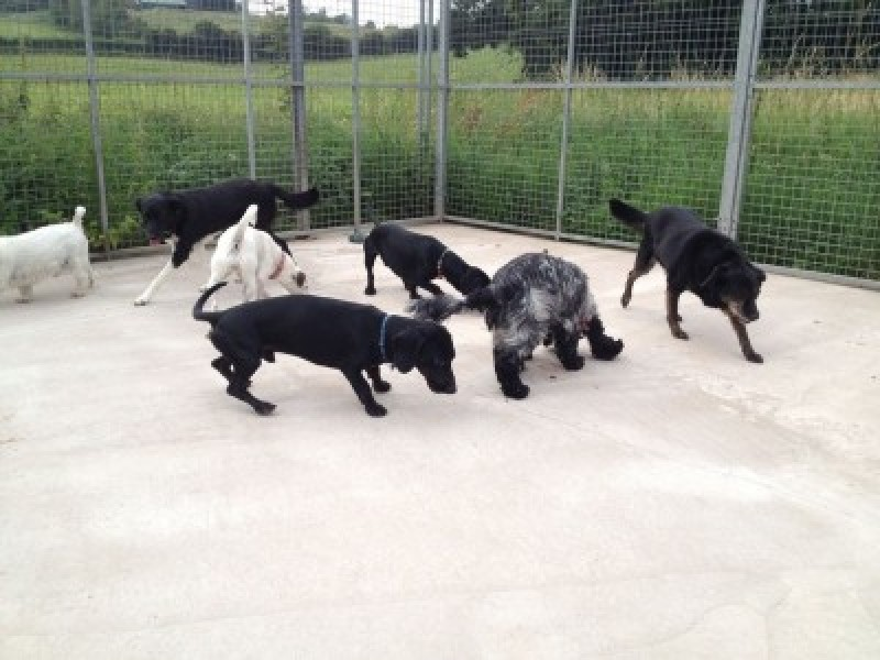 Alcester Bromsgrove kennels
