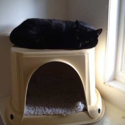 cattery redditch bromsgrove alcester